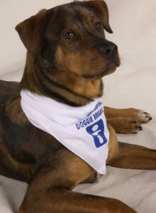 Top 5 breeds in Doggie Brigade