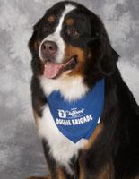 Ruby Bussey Bermese Mountain Dog
