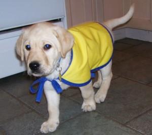 Hi, I'm Bishop and I'm a Doggie Brigade star
