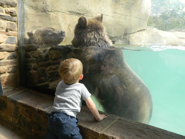 jordan-and-grizzlies