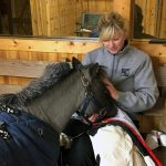 Willie trains to fill Petie's big horseshoes