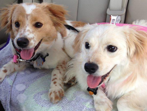 Dr. Kaniecki rescue dogs