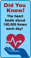 Did you know? The heart beats 100,000 times each day!