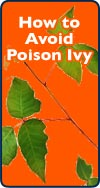 How to Avoid Poison Ivy