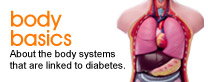 Body basics: About the body systems that are linked to diabetes