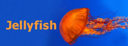 Jellyfish homework help