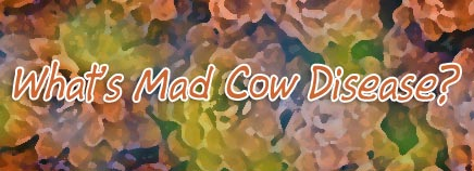 What's Mad Cow Disease?
