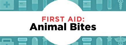 First Aid: Animal Bites