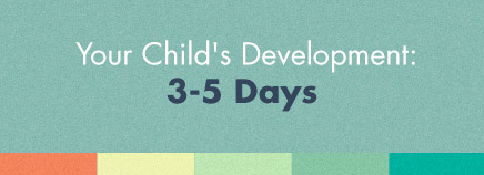 Your Child's Development: 3-5 Days