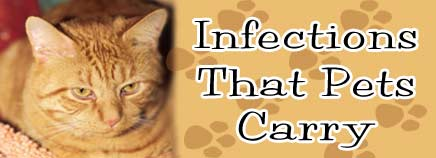 Infections That Pets Carry