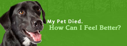 My Pet Died. How Can I Feel Better?