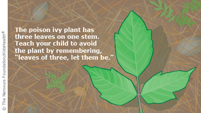 The poison ivy plant has three leaves on one stem. Teach your kids to avoid the plant by remembering, leaves of three, let them be.