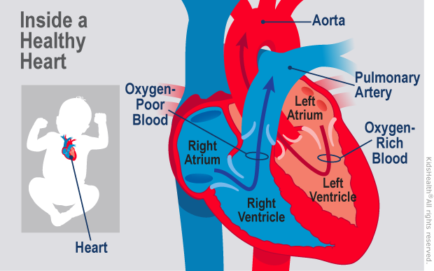 healthy heart illustration
