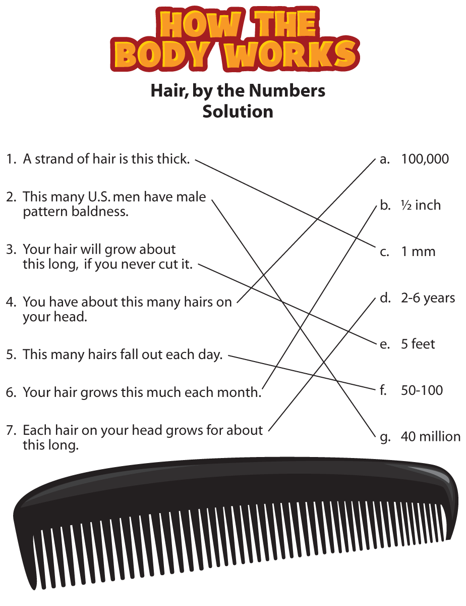 HTBW hair solutions PNG