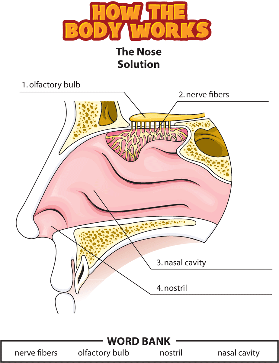 HTBW nose solutions PNG