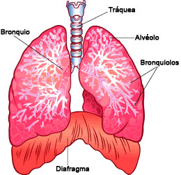 Your Lungs Spanish