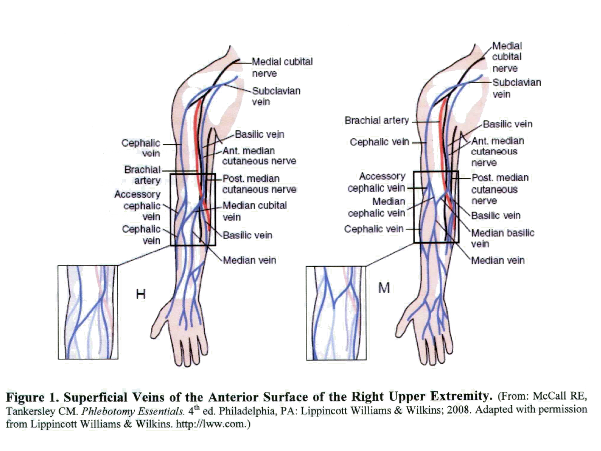 Anatomy of arm veins for venipuncture